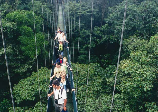 Tour Details. Canopy tour & Monteverde Cloud Forest - Pininos Adventures