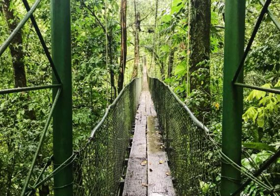Tenorio Hanging Bridges-Rainforest-Heliconias